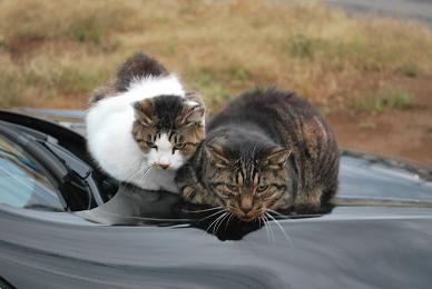 2匹の猫にガン飛ばされながら….JPG