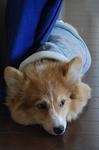 「ダス犬」と命名。.JPG