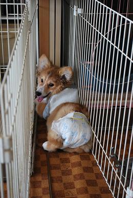 いきなりハマる、ダス犬。.JPG
