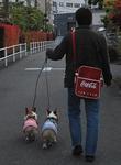 いつも通りお散歩です♪-1.JPG