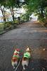 お散歩♪.JPG
