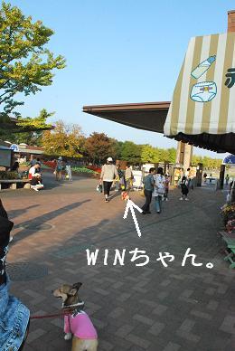 ここで、WINちゃんはお別れです。.JPG