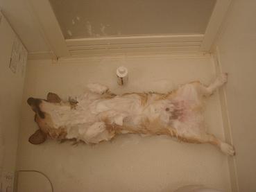 そのまま風呂にも入れられ….JPG