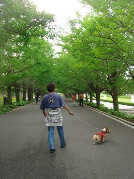 ちょっとお散歩。.JPG