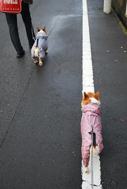 なぜかラインの上を歩く。.JPG