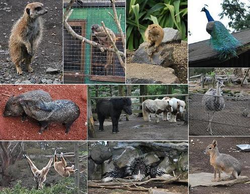 まだまだ沢山いる、動物達。.JPG
