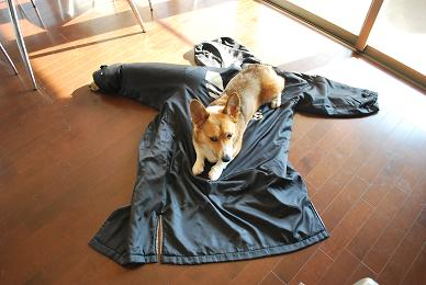 まめパパお気に入りのコートです。.JPG