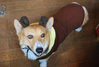 まめ太郎、鹿に見える。.JPG