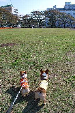 やっぱり、公園。.JPG