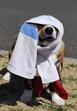 やっぱりタオルを巻かれる。.JPG