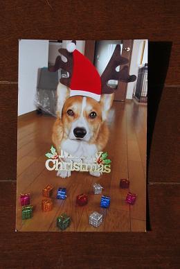 アインママさん&アイン君からのクリスマスカード♪.JPG