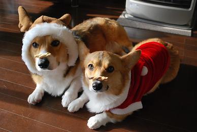 クリスマスもこんなですか!?.JPG