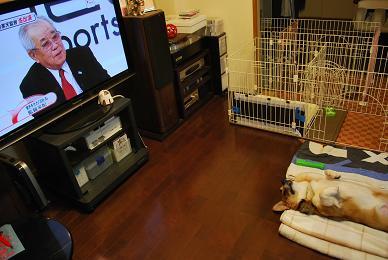 テレビ見てる。.JPG