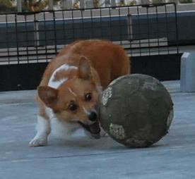 ボールを運ぼうとするが-1.JPG