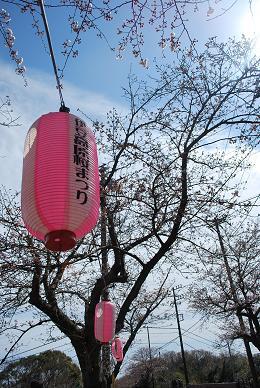 伊豆高原桜まつり。.JPG