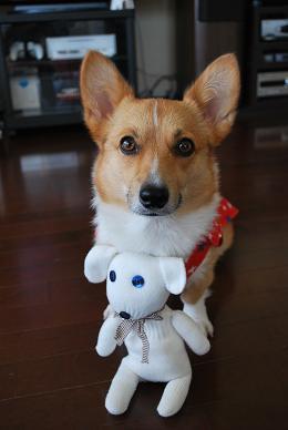 可愛いお人形さんはまめママのです。.JPG