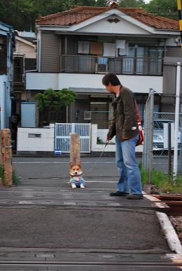 帰り道、踏切を拒むまめ太郎….JPG