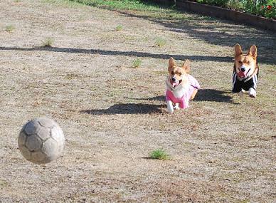 再びボールを追いかけ….JPG