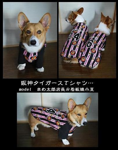 阪神タイガースTシャツ。.JPG