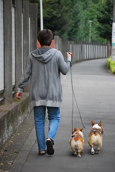 散歩♪.JPG