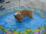 自分からプールに入るようになった。.JPG