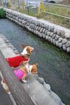 川が好きなんです。.JPG