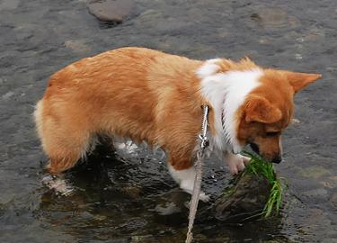川に入っても、草を食う女。.JPG