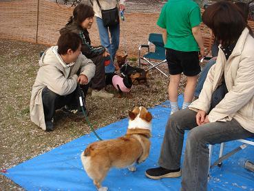 続々と集まる犬友達。.JPG