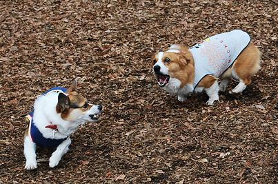 二人とも、顔怖すぎる。.JPG