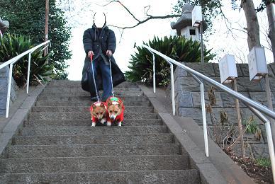 二人にとってはメインのお散歩。.JPG