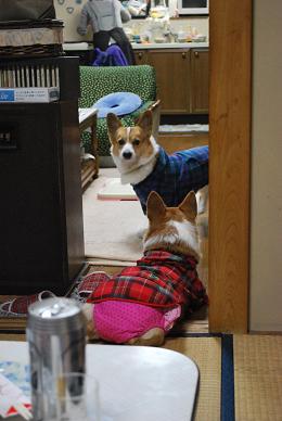 入り口をふさがれ、助けを求めるコタローちゃん.JPG