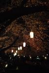 夜桜も良いモンです♪.JPG