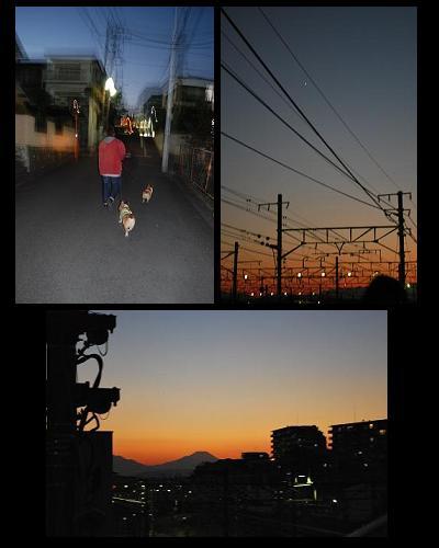 夕方のお散歩.JPG
