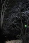 あっという間に暗くなってしまい…-1.JPG