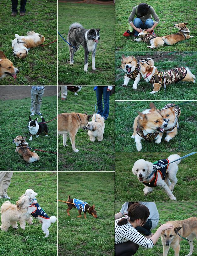 いつもの公園でみんなと遊んで….JPG