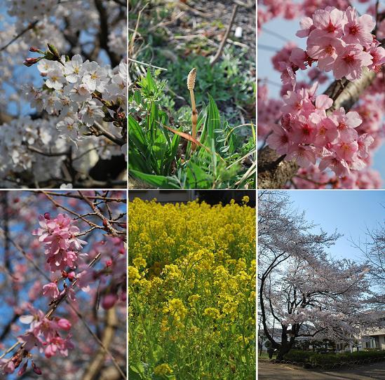 お花見散歩。.JPG