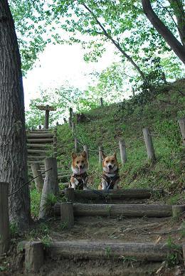 さて、見覚えのある階段です・・・.JPG