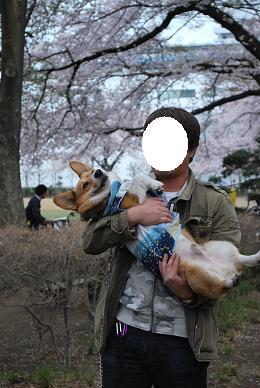 まめ太郎さん、うるさいので相変わらず抱っこ….JPG