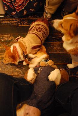 まめ太郎さんと小豆さんは長距離散歩でお疲れ….JPG