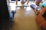 まめ太郎さんは、猫が近付くと場所を空けます。.JPG
