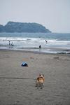 まめ太郎さんはいきなり、海目がけて走ります….JPG
