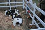 もう一度牛さんの匂いを嗅ぎ….JPG