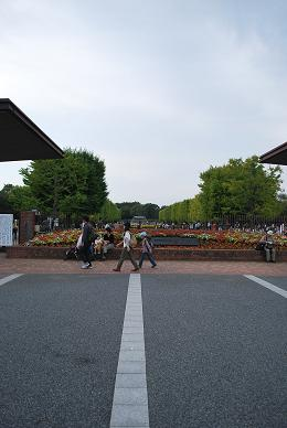 やって来ました!昭和記念公園。.JPG