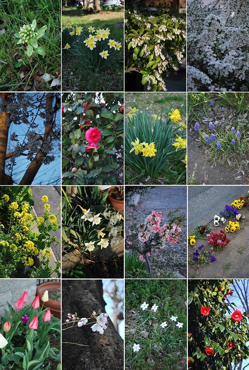アチコチに花が咲いてます。.JPG