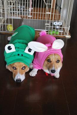 カエルとウサギ….JPG
