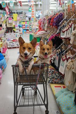 ペットショップでお買い物。.JPG