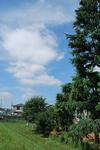 今朝、川沿いのお散歩コースへ…-1.JPG