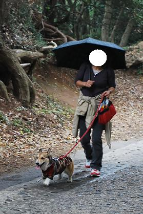 小雨降る中元気に歩きます。.JPG
