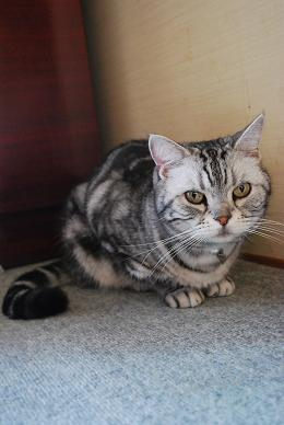猫達とも遊び…-1.JPG