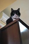 猫達とも遊び….JPG